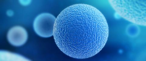 donacion de ovulos serma