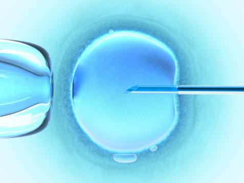 Imagen Fertilización